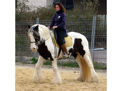 centre equestre 25